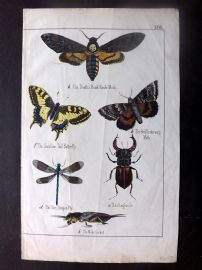 Adam White C1860 Hand Col Print. Hawk Moth, Butterflies, Dragon Fly, Cricket